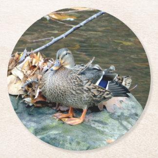 Pato del pato silvestre en el práctico de costa de posavasos desechable redondo