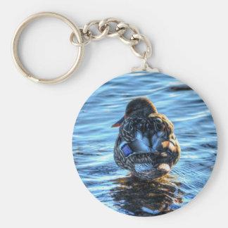 Pato del pato silvestre en el río del invierno - f llavero