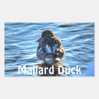 Pato del pato silvestre en el río del invierno - pegatina rectangular