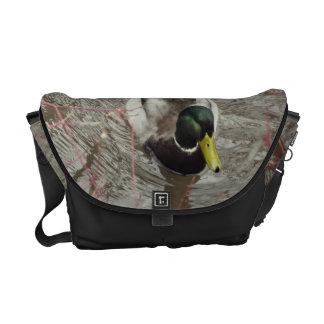 Pato del pato silvestre en la charca bolsa de mensajería
