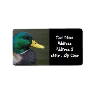 Pato del pato silvestre etiqueta de dirección