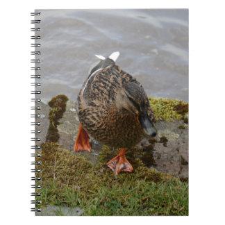 Pato del pato silvestre libros de apuntes con espiral