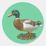 Pato del pato silvestre pegatinas