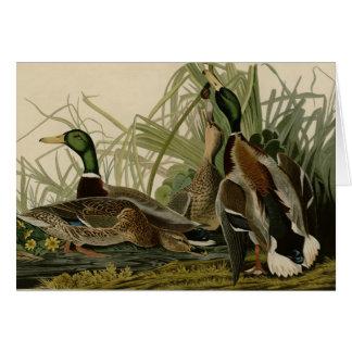Pato del pato silvestre tarjeta de felicitación
