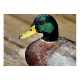 Pato del pato silvestre tarjeta de visita