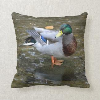 Pato del pato silvestre (varón) en almohada de la