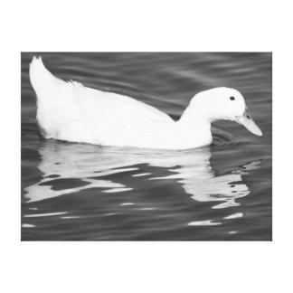 Pato en agua impresion en lona