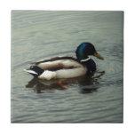 Pato en el agua azulejos cerámicos