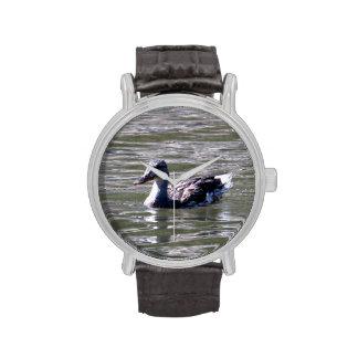 Pato en el agua relojes