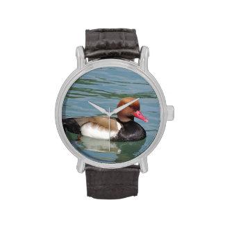 Pato en el agua relojes de pulsera