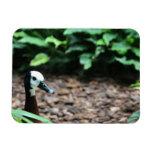 Pato en el imán del parque zoológico de Milwaukee