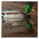 Pato en la teja del río Colorado