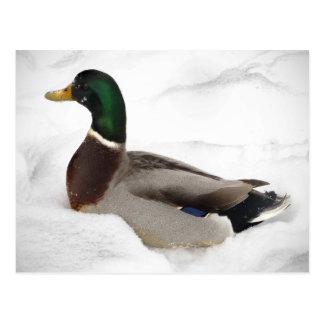 Pato en nieve tarjetas postales