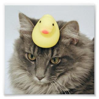 Pato en su cabeza cojinete