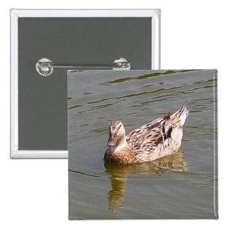 Pato femenino 3 del pato silvestre pin