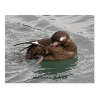 Pato femenino del Harlequin Preening en el agua Tarjeta Postal