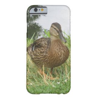 Pato femenino del pato silvestre funda de iPhone 6 barely there