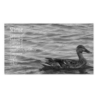 Pato femenino hermoso del pato silvestre tarjeta de visita