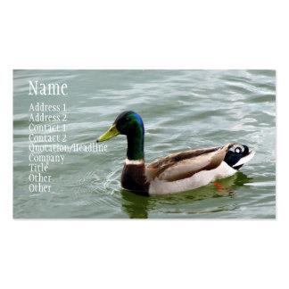 Pato hermoso del pato silvestre plantilla de tarjeta de negocio