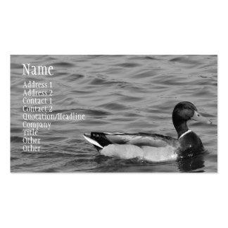 Pato hermoso del pato silvestre tarjetas de visita