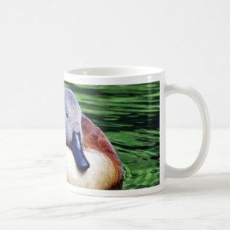 Pato hermoso en el agua tazas de café