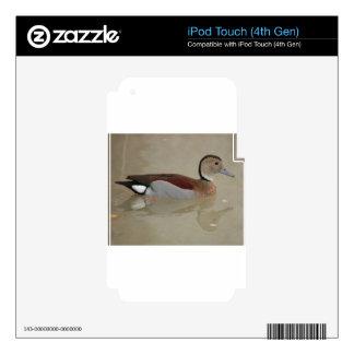 Pato hermoso iPod touch 4G calcomanías