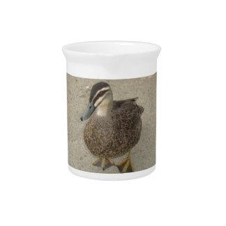 Pato inquisitivo jarras