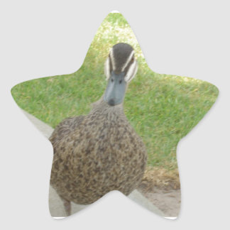 Pato inquisitivo pegatina en forma de estrella