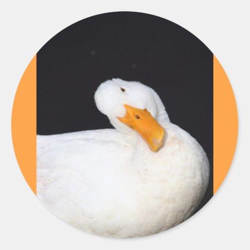 Pato lindo etiquetas redondas