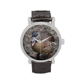 pato marrón quacking en la cámara relojes de pulsera