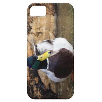 Pato masculino del pato silvestre iPhone 5 carcasas