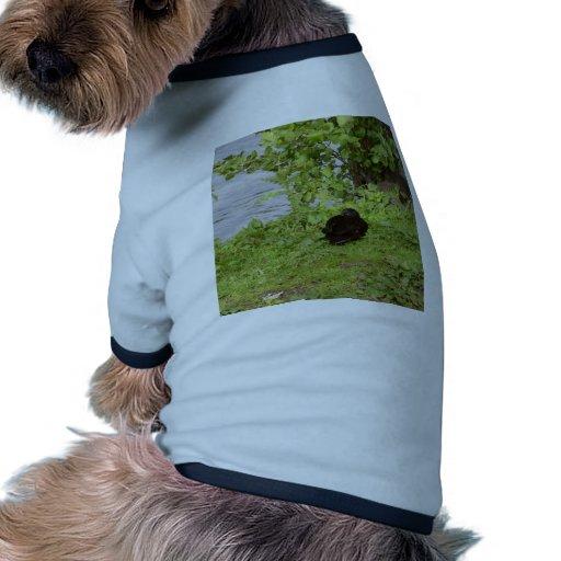 Pato negro camiseta con mangas para perro