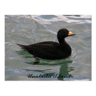Pato negro de la negreta, isla de Unalaska Tarjeta Postal