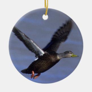 Pato negro del vuelo adorno navideño redondo de cerámica