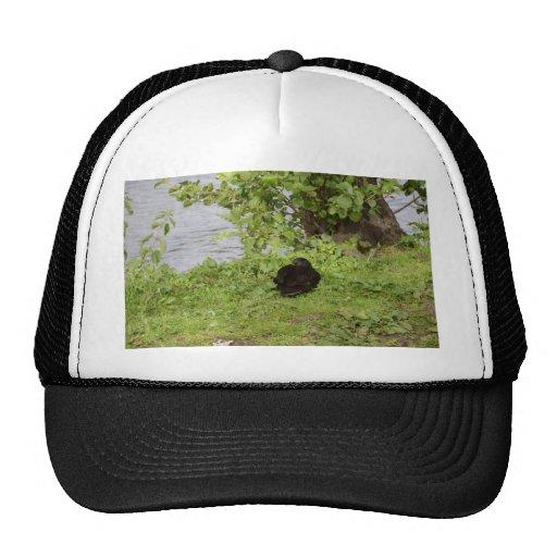 Pato negro gorros bordados
