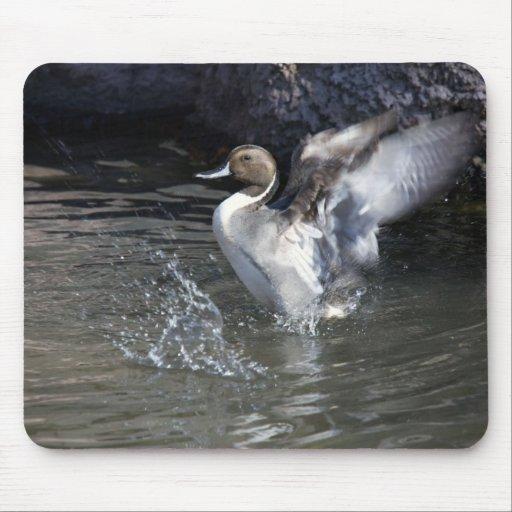 Pato rojizo tapete de ratones