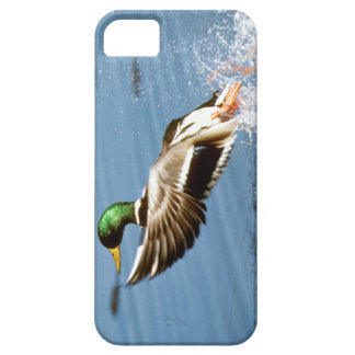 Pato salvaje - cubierta del iPhone 5 Funda Para iPhone 5 Barely There