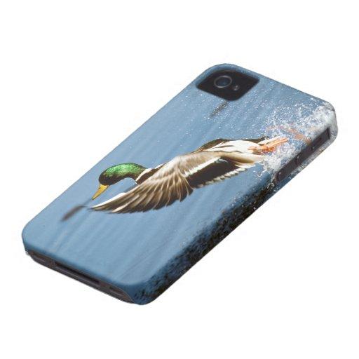 Pato salvaje - cubierta intrépida de Blackberry iPhone 4 Cobertura