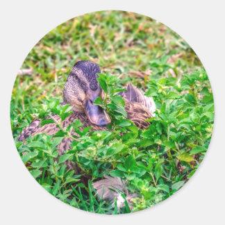 Pato silvestre de Hidding Pegatina Redonda