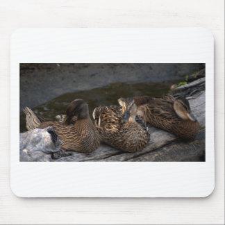 Pato silvestre de la madre y dos niños alfombrillas de ratones