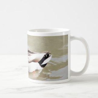 Pato silvestre de la natación de Platyrhynchos de  Tazas De Café