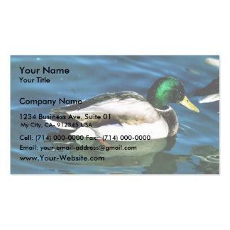 Pato silvestre - drake tarjetas de visita
