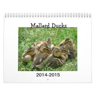 Pato silvestre Duckings