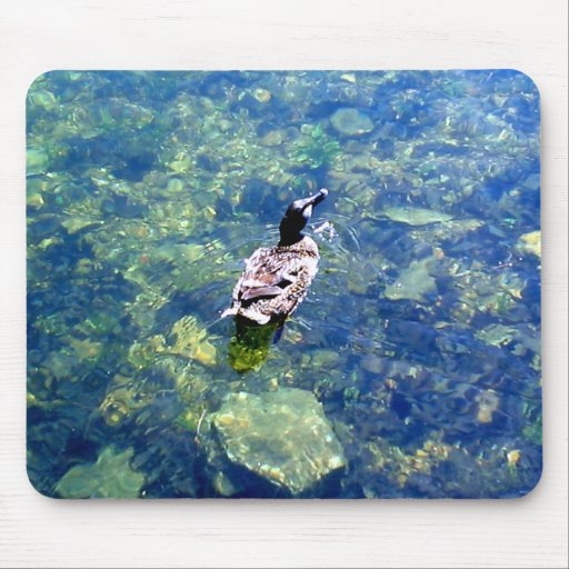 Pato silvestre en el lago norfolk tapete de ratones