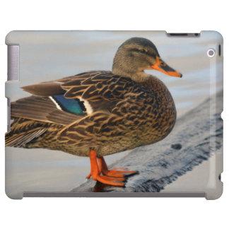 Pato silvestre femenino en Crystal Springs Funda Para iPad
