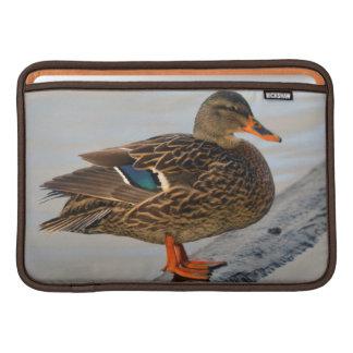Pato silvestre femenino en Crystal Springs Fundas MacBook
