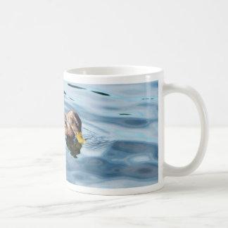 Pato silvestre femenino en el agua tazas de café