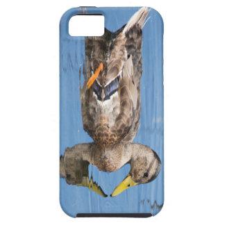 Pato silvestre femenino iPhone 5 fundas