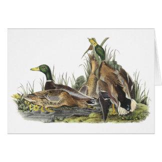 Pato silvestre, Juan Audubon Tarjetón