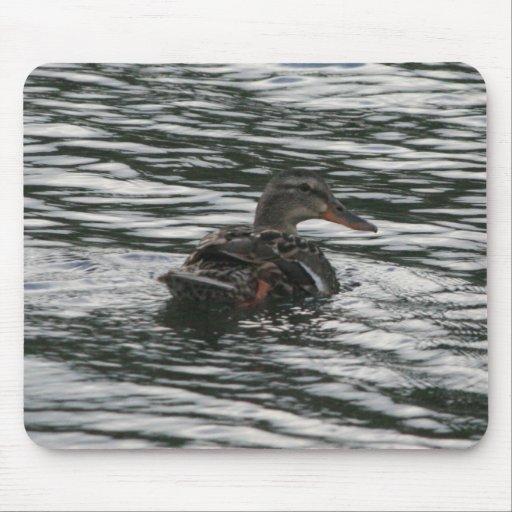 Pato silvestre Mousepad de la natación Alfombrilla De Ratones